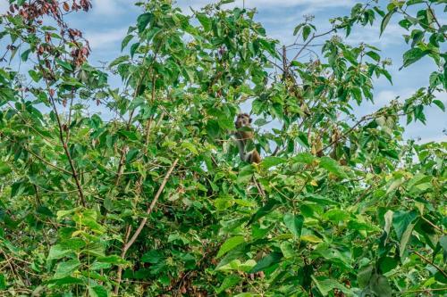 Wildescape Polonnaruwa