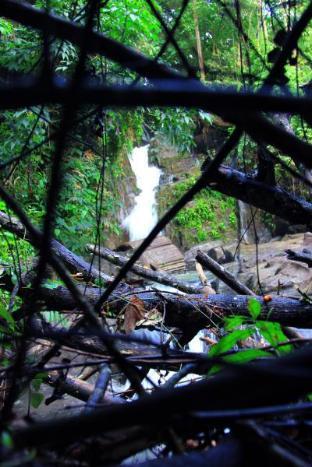 Danadhee Jungle Rest