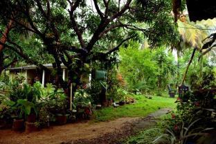 Sigiriya Green Garden Homestay