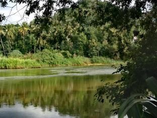393 River ivys