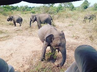 Athmankada safari resort
